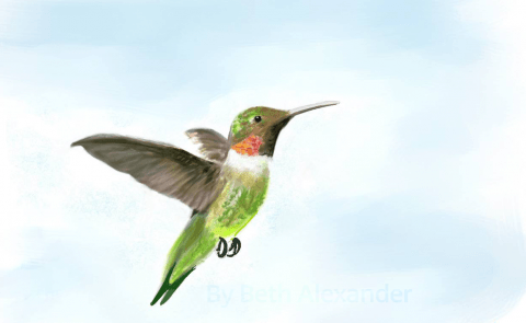 Humming-bird-by-Beth-Alexander