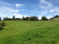 Russian Ridge Meadow