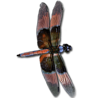 dragonfly-animated